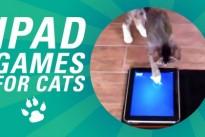 Applications pour chats